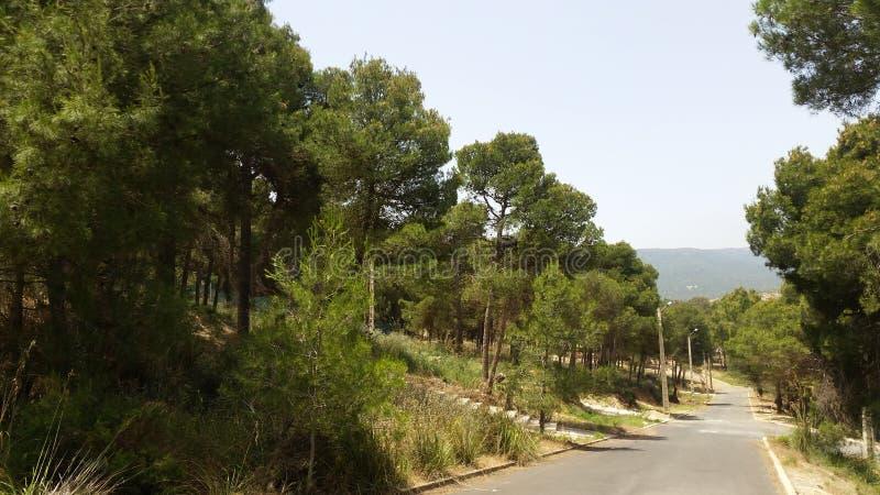 Park von tafoughalt, Marokko lizenzfreies stockbild