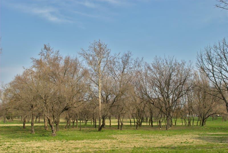 Park - Vorfrühling - weckende Natur lizenzfreies stockbild