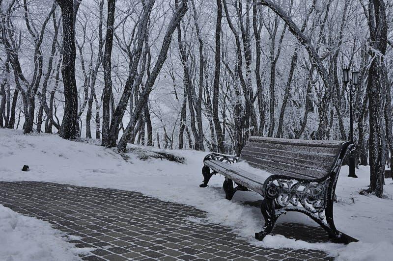 Park w śniegu w zimie zdjęcia royalty free