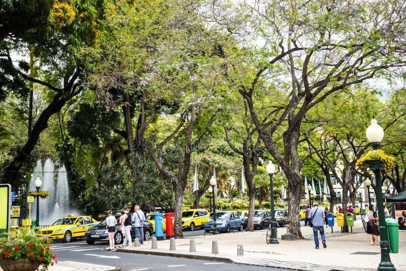 Park w Drzewnych Prążkowanych Głównych zakupy ulicach w Funchal maderze Portugalia zdjęcia stock