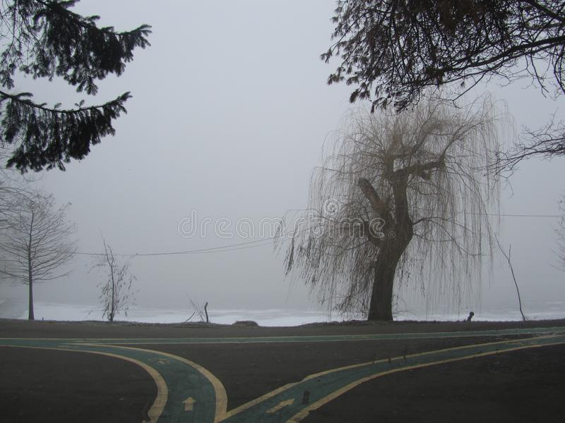 Park w mgle w ranku obrazy stock