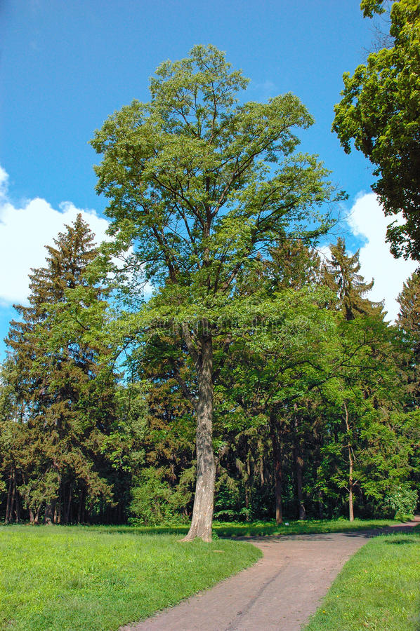 Download Park W Pałac I Parka Kompleksie W Wiosce Kachanivka Obraz Stock - Obraz złożonej z manor, architektury: 53787543