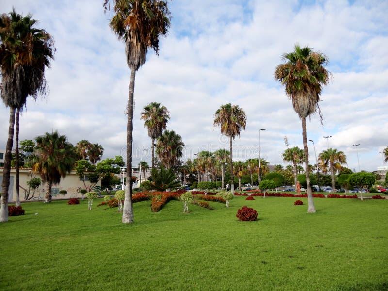Park w Tenerife, wyspy kanaryjska, Hiszpania obraz stock