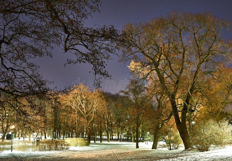 Park w zima wieczór obraz stock