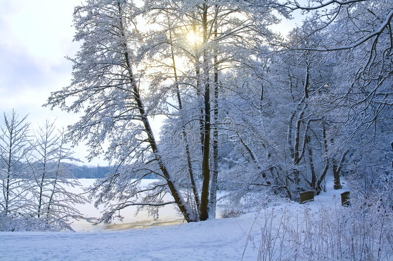 Download Park in winter stock image. Image of white, calm, frozen - 12787013