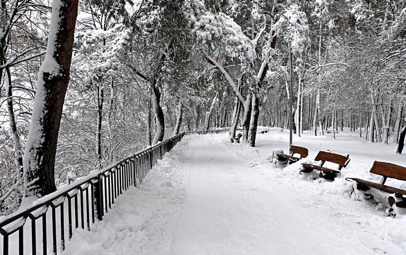 In the park in winter. royalty free stock photo