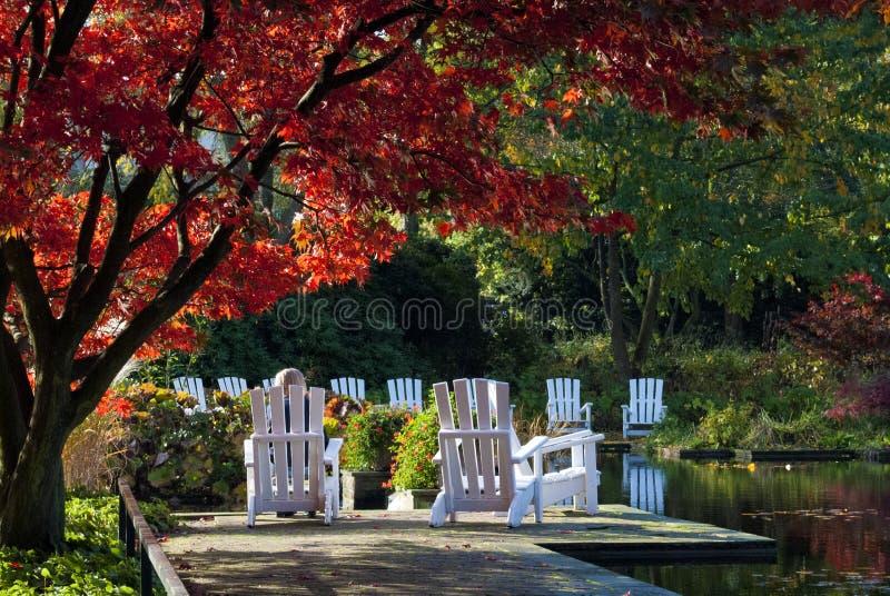 Park z czerwonymi drzewa i bielu krzesłami obraz royalty free