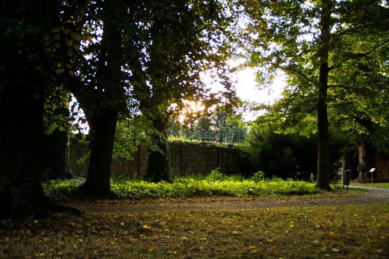Park z drogą zdjęcie stock