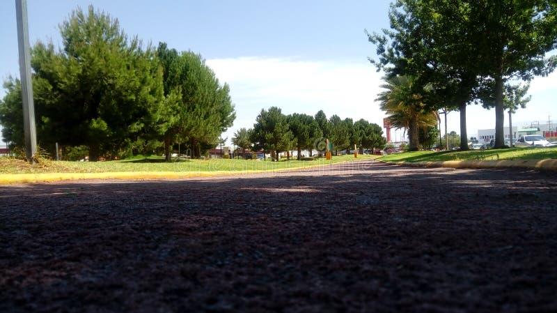 Park z drzewami obraz royalty free