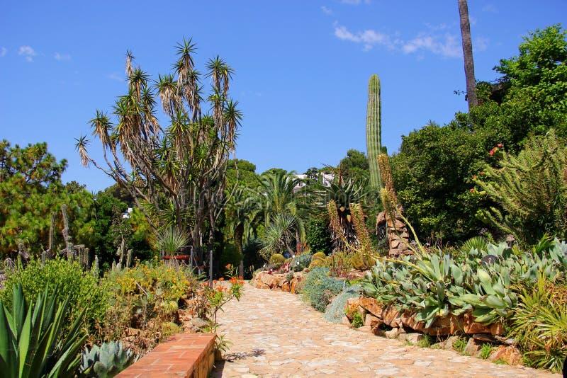Park z drzewkami palmowymi i kaktusami fotografia stock