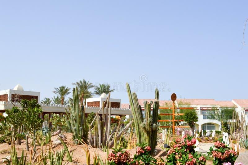 Park z kaktusową egzotyczną tropikalną pustynią przeciw bielu kamienia budynkom w Meksykańskim Latyno-amerykański stylu przeciw n zdjęcie royalty free