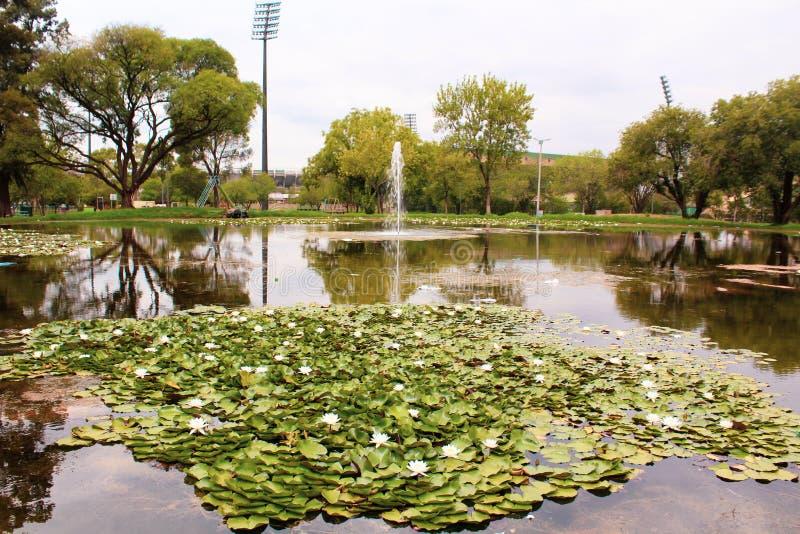 Park z małym jeziorem i wodnymi lelujami obraz royalty free