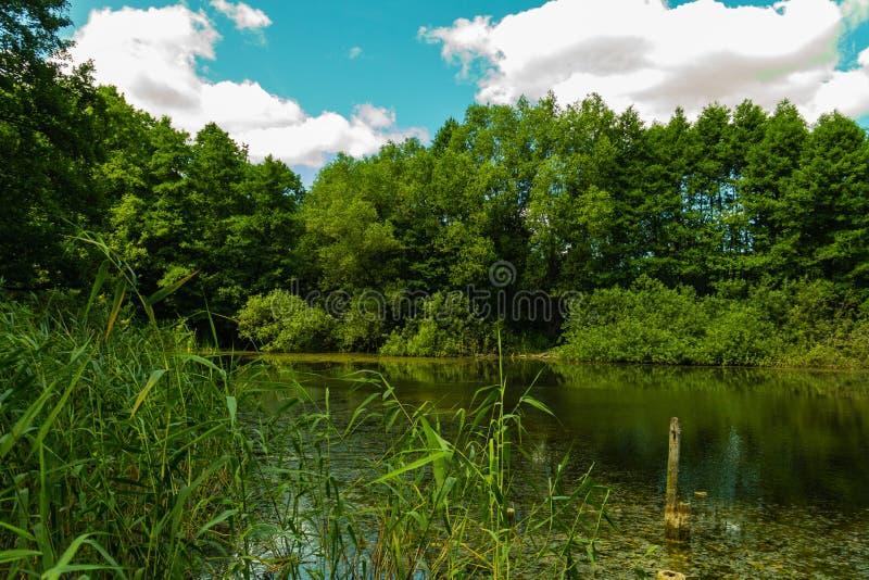 park z starymi drzewami i jeziorem obraz stock