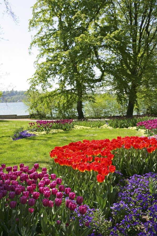 Park z Tulipanowymi kwiatami zdjęcie stock