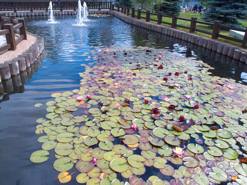 Park Z Wodnym Lilys obrazy stock