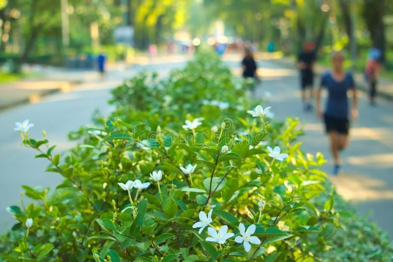 Parkagenten, in park plaatsen, die op bedekte wegen, dichtbij een mooie witte bloembarrière lopen stock afbeelding