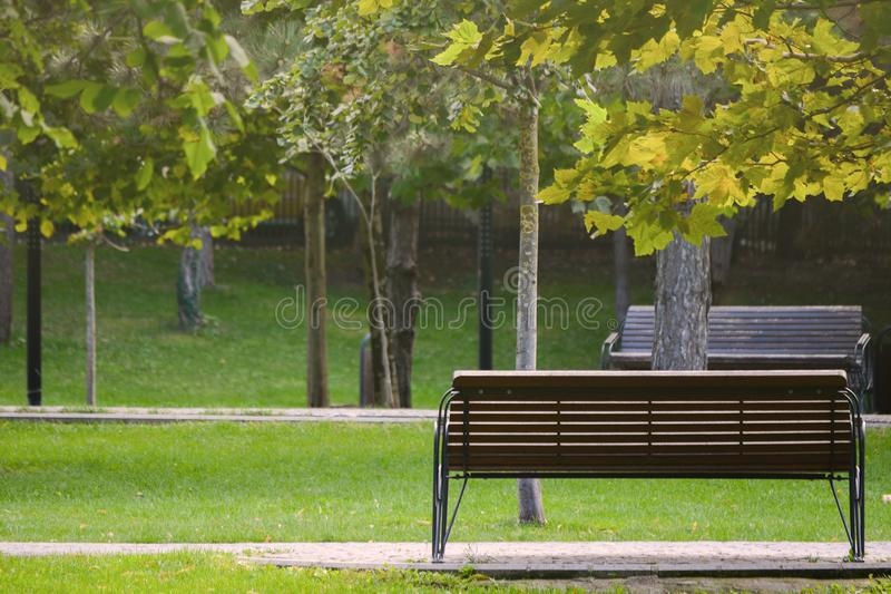 Parkbank auf einer Gasse mit grünem Gras und Bäumen mit farbigen Blättern und Sonnenlicht auf goldener Stunde stockfotografie
