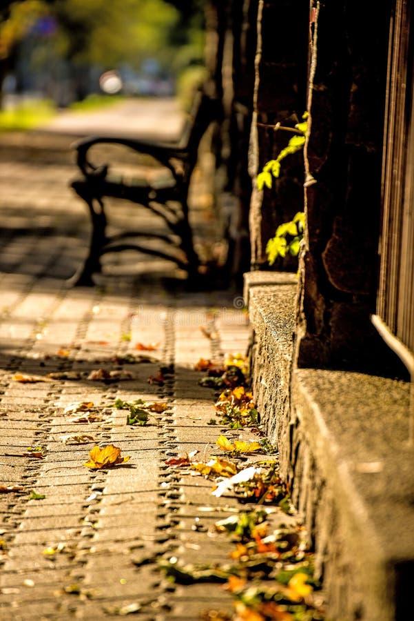 Parkbank in een stad in herfstzon royalty-vrije stock afbeelding