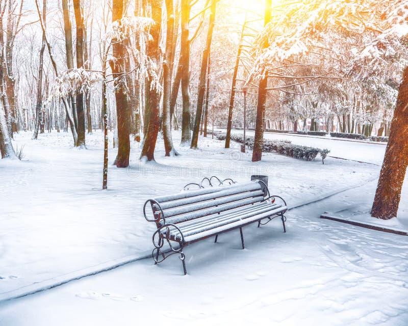 Parkbank en bomen die door zware sneeuw wordt behandeld royalty-vrije stock afbeeldingen