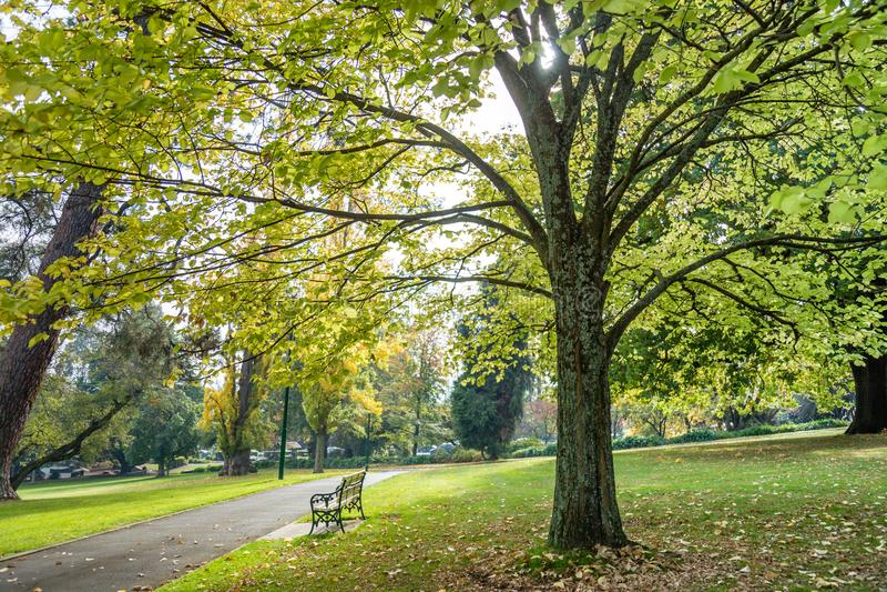 Parkbank onder een grote boom in een openbaar park stock fotografie