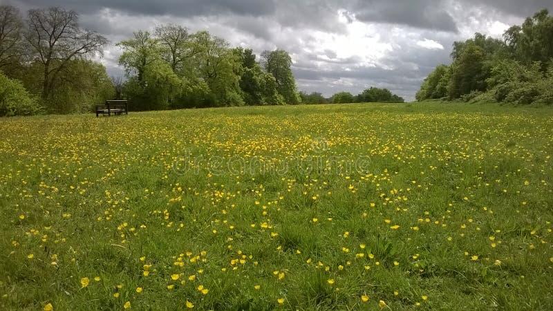 Parkbank op gebied van Boterbloemen en onweerswolkenscène royalty-vrije stock afbeeldingen