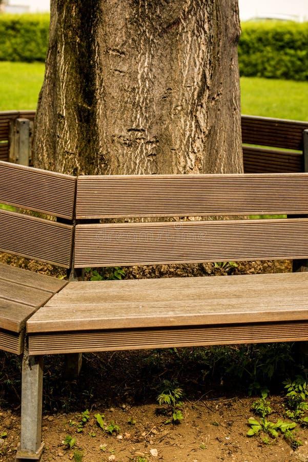 Parkbank rond een boom royalty-vrije stock afbeeldingen