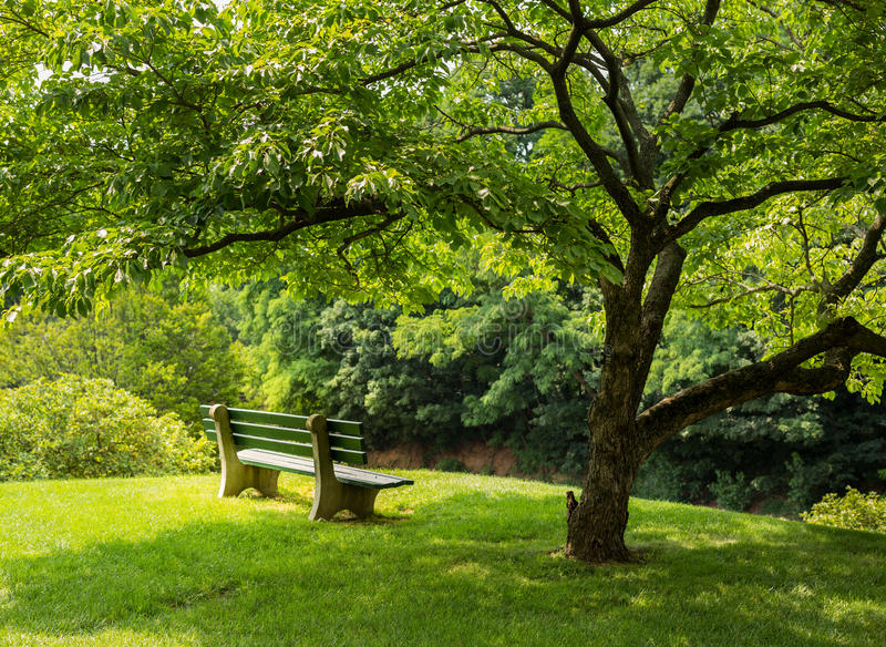 Parkbank unter Baum des blühenden Hartriegels stockfoto