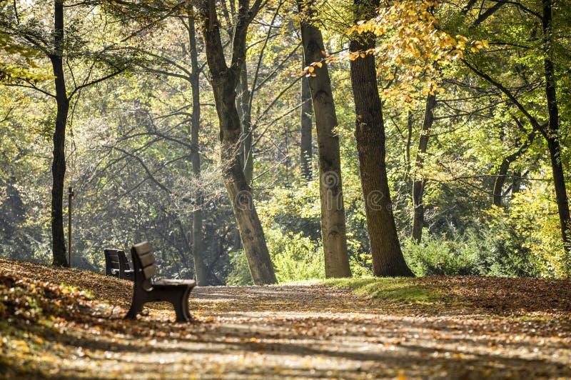 Download Outono imagem de stock. Imagem de cena, outono, cadeira - 29842423