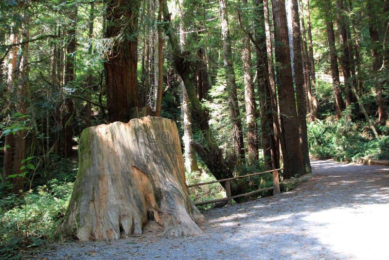 Parkbomen van Geheimzinnigheid royalty-vrije stock afbeeldingen