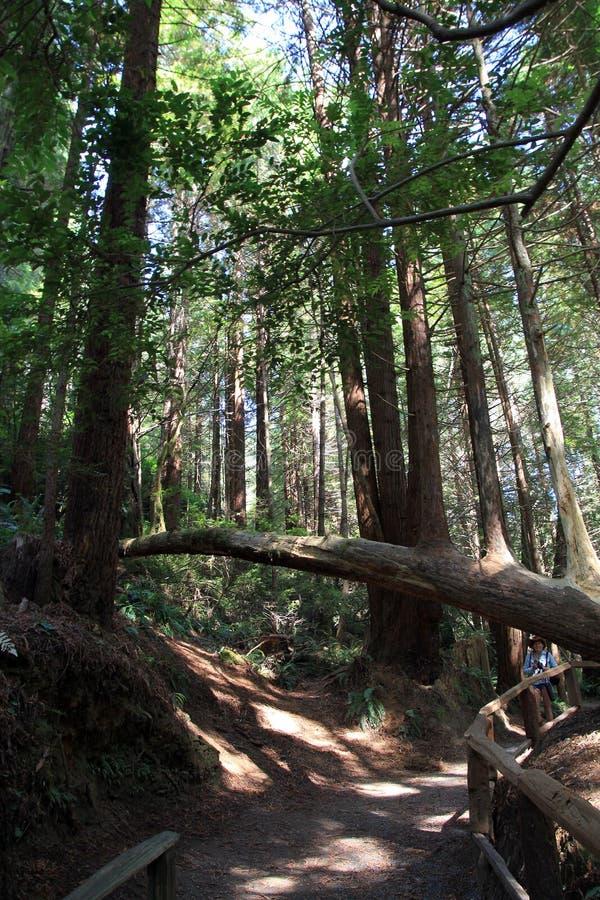 Parkbomen van Geheimzinnigheid royalty-vrije stock foto's