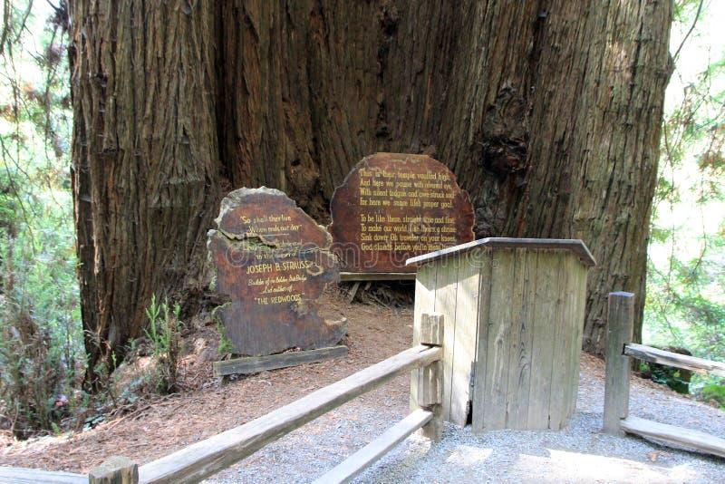 Parkbomen van Geheimzinnigheid stock fotografie