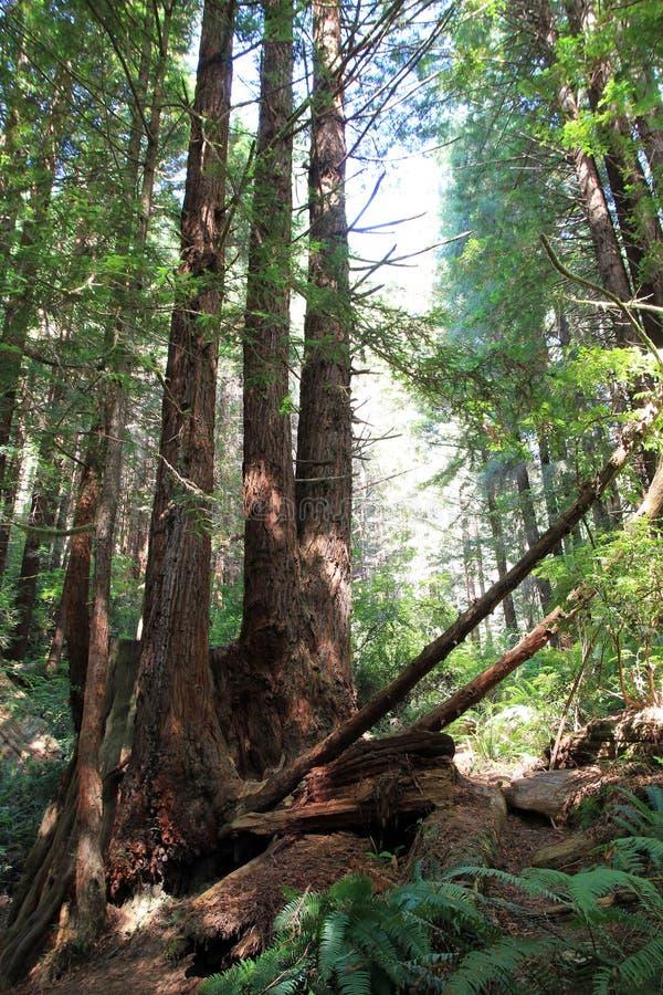 Parkbomen van Geheimzinnigheid stock afbeelding