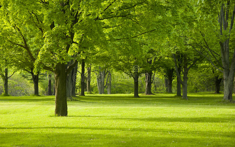 Parkbomen in vroege de Lentetijd royalty-vrije stock foto