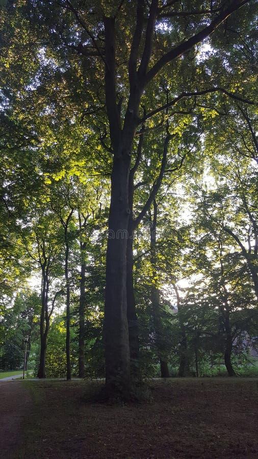 Parkboom Forest Sun Walking Baum Sonne royalty-vrije stock foto