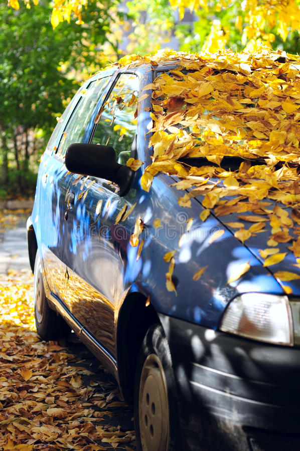 Download Parked Car Covered With Yellow Leaves Stock Photo - Image: 26806624