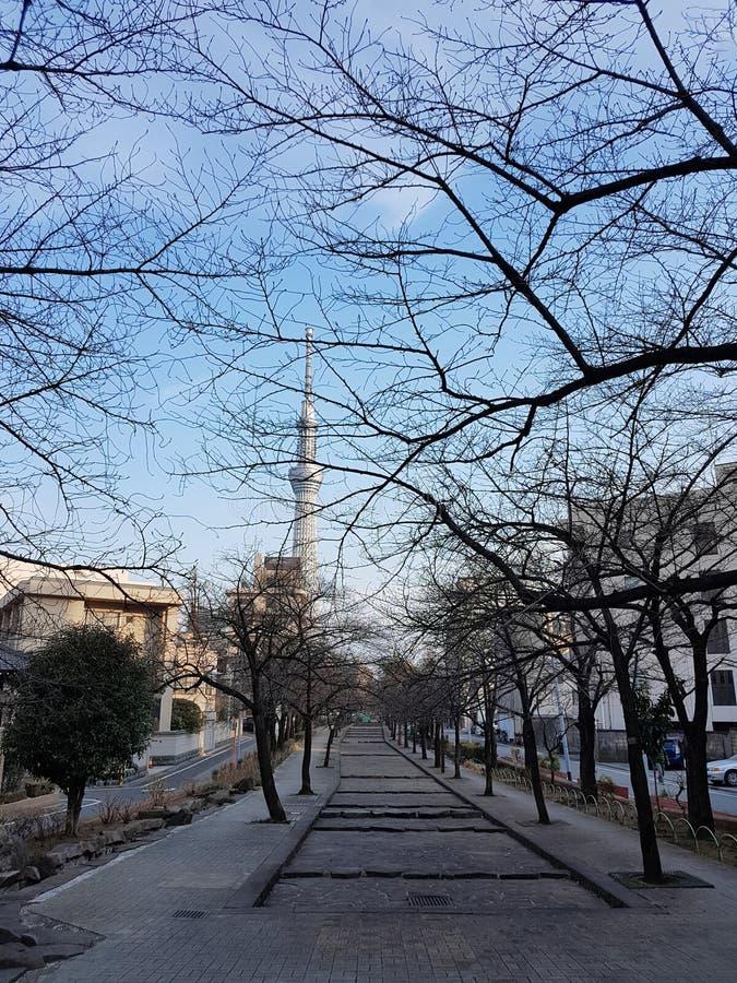Parken in de herfst is Er een boom zonder bladeren En kan het Gebouw van de de Hemelboom van Tokyo in Japan zien royalty-vrije stock afbeeldingen