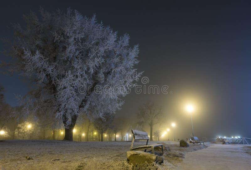 Parken Sie Flusspromenade an einem eisigen Winterabend lizenzfreies stockfoto