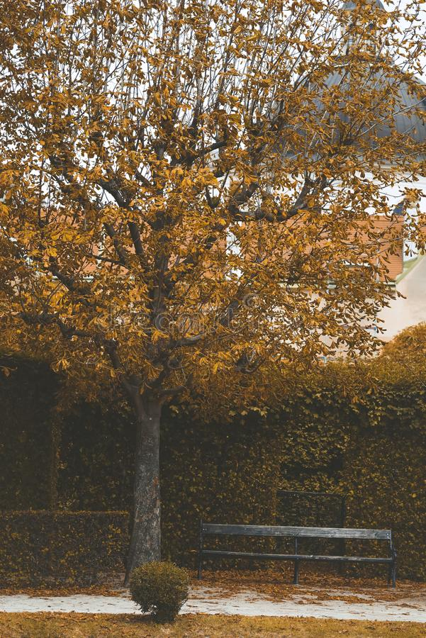 Parken Sie mit Bäumen, geschorenen Büschen und einer Bank Gelbe Herbstlandschaft stockfotografie