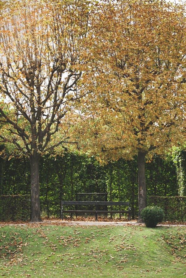 Parken Sie mit Bäumen, geschorenen Büschen und einer Bank Gelbe Herbstlandschaft stockfotos