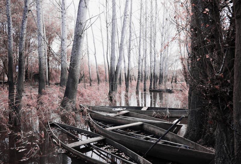 Parkera av Pateira de Fermentelos fotografering för bildbyråer