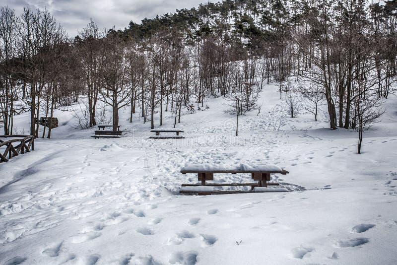Parkera bänkar fäktar och träd som täckas vid tung insnöad vintertid i Italien arkivbild