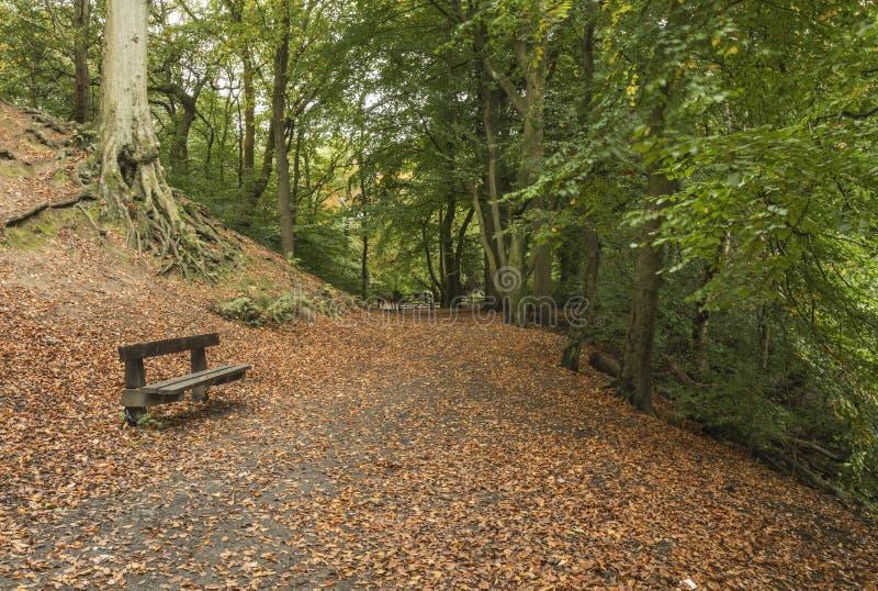 Parkera bänken på Daisy Nook Country Park, nära Oldham arkivfoto
