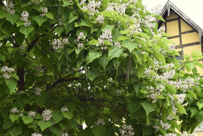 Parkera blommor fotografering för bildbyråer