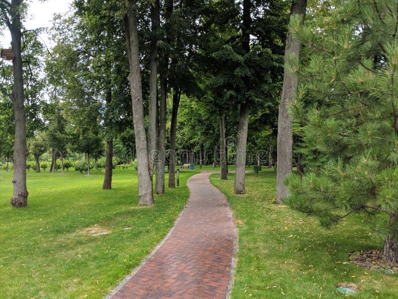 Parkera gränden som sträcker in i avståndet bland träd och grönt gräs i naturliga färger royaltyfri foto
