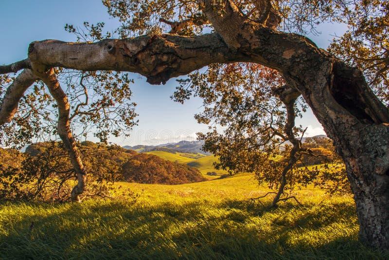 Parkera i Sonoma County royaltyfri fotografi