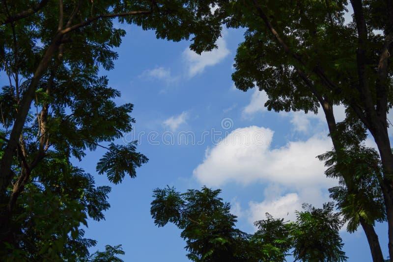 Parkera i stad av Bangkok i Thailand mot klar blå himmel med arkivfoton