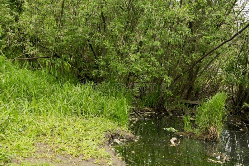 Parkera landscapepicnic omr?de f?r sommar, banor, floden royaltyfri foto