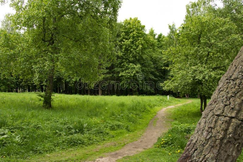 Parkera landscapepicnic omr?de f?r sommar, banor, floden royaltyfri bild