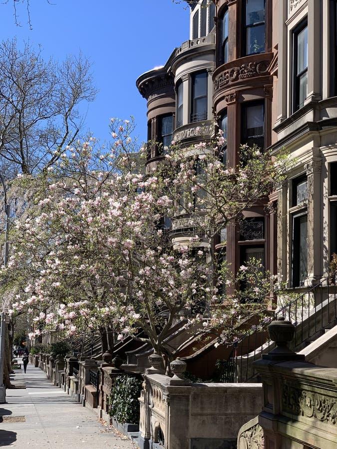 Parkera lutningen, Brooklyn, New York City, USA royaltyfria foton