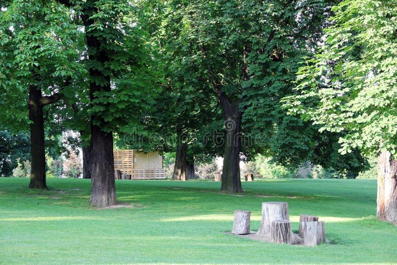 Parkera med gröna träd och stubbar royaltyfria bilder